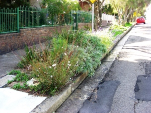 Good nature stip planting at the corner of Lincoln St & Railway Ave Stanmore