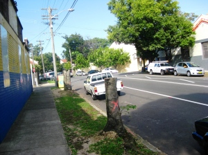 Electricity utility cut down these trees on Salisbury Road, Camperdown