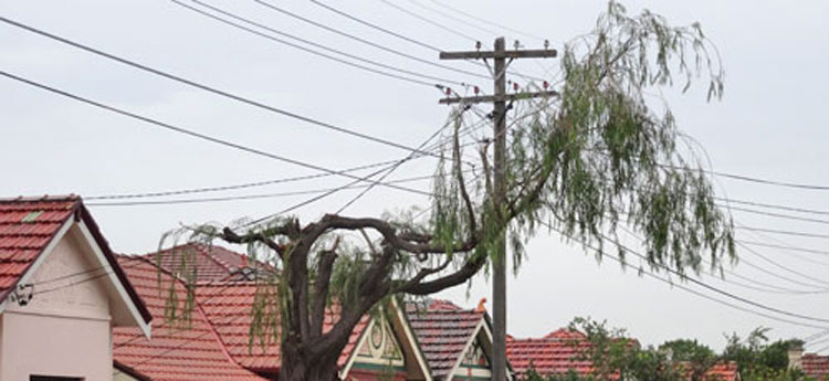 street-tree-pruning-warren-rd-marrickville-2-photo-by-saving-our-trees-750px