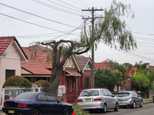 street-tree-pruning-warren-rd-marrickville-2-photo-by-saving-our-trees